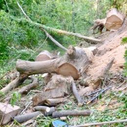 curadelverde.com-cura-del-verde-macerata-treeclimbing-potatura-alberi-alto-fusto-fruttiferi-alberi-da-frutto-olivi-viti-vigna-siepi-giardinaggio-BonGuj13
