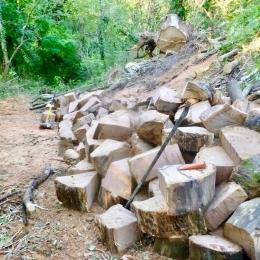 curadelverde.com-cura-del-verde-macerata-treeclimbing-potatura-alberi-alto-fusto-fruttiferi-alberi-da-frutto-olivi-viti-vigna-siepi-giardinaggio-BonGuj16