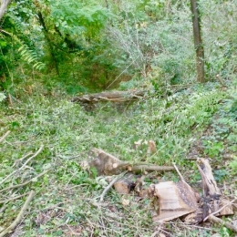 curadelverde.com-cura-del-verde-macerata-treeclimbing-potatura-alberi-alto-fusto-fruttiferi-alberi-da-frutto-olivi-viti-vigna-siepi-giardinaggio-BonGuj19