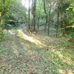 curadelverde.com-cura-del-verde-macerata-treeclimbing-potatura-alberi-alto-fusto-fruttiferi-alberi-da-frutto-olivi-viti-vigna-siepi-giardinaggio-BonGuj27