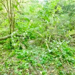 curadelverde.com-cura-del-verde-macerata-treeclimbing-potatura-alberi-alto-fusto-fruttiferi-alberi-da-frutto-olivi-viti-vigna-siepi-giardinaggio-BonGuj28