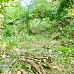curadelverde.com-cura-del-verde-macerata-treeclimbing-potatura-alberi-alto-fusto-fruttiferi-alberi-da-frutto-olivi-viti-vigna-siepi-giardinaggio-BonGuj29