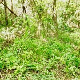 curadelverde.com-cura-del-verde-macerata-treeclimbing-potatura-alberi-alto-fusto-fruttiferi-alberi-da-frutto-olivi-viti-vigna-siepi-giardinaggio-BonGuj30