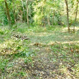curadelverde.com-cura-del-verde-macerata-treeclimbing-potatura-alberi-alto-fusto-fruttiferi-alberi-da-frutto-olivi-viti-vigna-siepi-giardinaggio-BonGuj31