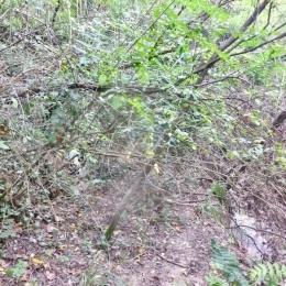 curadelverde.com-cura-del-verde-macerata-treeclimbing-potatura-alberi-alto-fusto-fruttiferi-alberi-da-frutto-olivi-viti-vigna-siepi-giardinaggio-BonGuj32