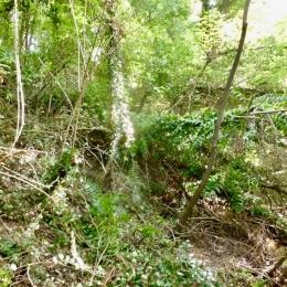 curadelverde.com-cura-del-verde-macerata-treeclimbing-potatura-alberi-alto-fusto-fruttiferi-alberi-da-frutto-olivi-viti-vigna-siepi-giardinaggio-BonGuj34