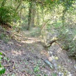curadelverde.com-cura-del-verde-macerata-treeclimbing-potatura-alberi-alto-fusto-fruttiferi-alberi-da-frutto-olivi-viti-vigna-siepi-giardinaggio-BonGuj35