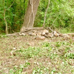 curadelverde.com-cura-del-verde-macerata-treeclimbing-potatura-alberi-alto-fusto-fruttiferi-alberi-da-frutto-olivi-viti-vigna-siepi-giardinaggio-BonGuj37