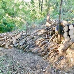 curadelverde.com-cura-del-verde-macerata-treeclimbing-potatura-alberi-alto-fusto-fruttiferi-alberi-da-frutto-olivi-viti-vigna-siepi-giardinaggio-BonGuj39