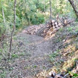 curadelverde.com-cura-del-verde-macerata-treeclimbing-potatura-alberi-alto-fusto-fruttiferi-alberi-da-frutto-olivi-viti-vigna-siepi-giardinaggio-BonGuj4