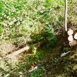curadelverde.com-cura-del-verde-macerata-treeclimbing-potatura-alberi-alto-fusto-fruttiferi-alberi-da-frutto-olivi-viti-vigna-siepi-giardinaggio-BonGuj7