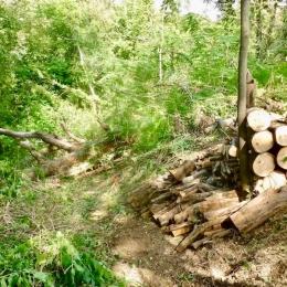 curadelverde.com-cura-del-verde-macerata-treeclimbing-potatura-alberi-alto-fusto-fruttiferi-alberi-da-frutto-olivi-viti-vigna-siepi-giardinaggio-BonGuj8