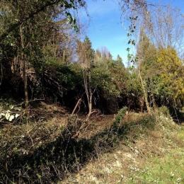 curadelverde.com-cura-del-verde-macerata-treeclimbing-potatura-alberi-alto-fusto-fruttiferi-alberi-da-frutto-olivi-viti-vigna-siepi-giardinaggio-Bonifica 006