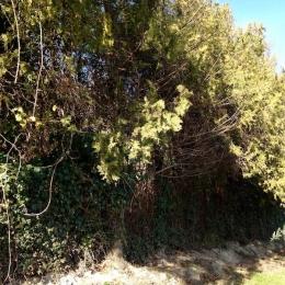 curadelverde.com-cura-del-verde-macerata-treeclimbing-potatura-alberi-alto-fusto-fruttiferi-alberi-da-frutto-olivi-viti-vigna-siepi-giardinaggio-Bonifica 007