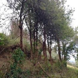 curadelverde.com-cura-del-verde-macerata-treeclimbing-potatura-alberi-alto-fusto-fruttiferi-alberi-da-frutto-olivi-viti-vigna-siepi-giardinaggio-Bonifica 008b