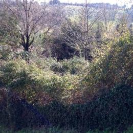 curadelverde.com-cura-del-verde-macerata-treeclimbing-potatura-alberi-alto-fusto-fruttiferi-alberi-da-frutto-olivi-viti-vigna-siepi-giardinaggio-Bonifica 014