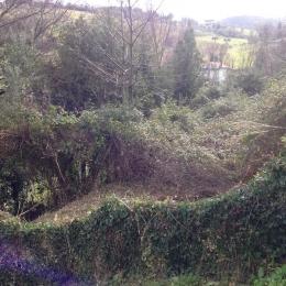 curadelverde.com-cura-del-verde-macerata-treeclimbing-potatura-alberi-alto-fusto-fruttiferi-alberi-da-frutto-olivi-viti-vigna-siepi-giardinaggio-Bonifica 015