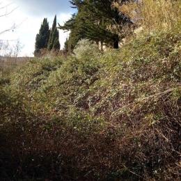 curadelverde.com-cura-del-verde-macerata-treeclimbing-potatura-alberi-alto-fusto-fruttiferi-alberi-da-frutto-olivi-viti-vigna-siepi-giardinaggio-Bonifica 018