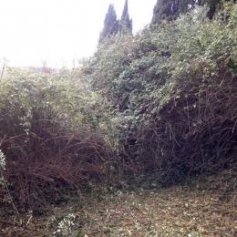 curadelverde.com-cura-del-verde-macerata-treeclimbing-potatura-alberi-alto-fusto-fruttiferi-alberi-da-frutto-olivi-viti-vigna-siepi-giardinaggio-Bonifica 020