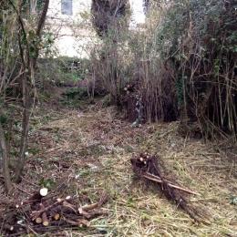 curadelverde.com-cura-del-verde-macerata-treeclimbing-potatura-alberi-alto-fusto-fruttiferi-alberi-da-frutto-olivi-viti-vigna-siepi-giardinaggio-Bonifica 029