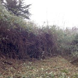 curadelverde.com-cura-del-verde-macerata-treeclimbing-potatura-alberi-alto-fusto-fruttiferi-alberi-da-frutto-olivi-viti-vigna-siepi-giardinaggio-Bonifica 034