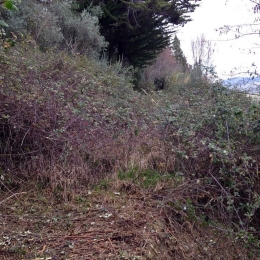 curadelverde.com-cura-del-verde-macerata-treeclimbing-potatura-alberi-alto-fusto-fruttiferi-alberi-da-frutto-olivi-viti-vigna-siepi-giardinaggio-Bonifica 037
