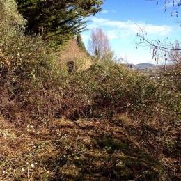curadelverde.com-cura-del-verde-macerata-treeclimbing-potatura-alberi-alto-fusto-fruttiferi-alberi-da-frutto-olivi-viti-vigna-siepi-giardinaggio-Bonifica 039