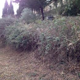 curadelverde.com-cura-del-verde-macerata-treeclimbing-potatura-alberi-alto-fusto-fruttiferi-alberi-da-frutto-olivi-viti-vigna-siepi-giardinaggio-Bonifica 049