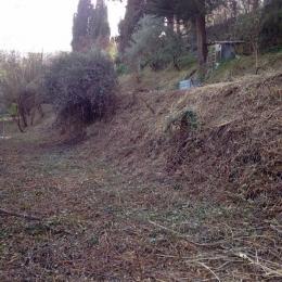 curadelverde.com-cura-del-verde-macerata-treeclimbing-potatura-alberi-alto-fusto-fruttiferi-alberi-da-frutto-olivi-viti-vigna-siepi-giardinaggio-Bonifica 052