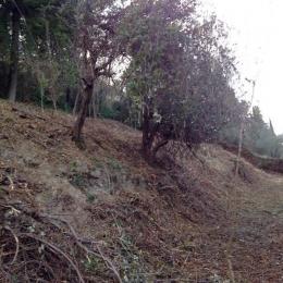 curadelverde.com-cura-del-verde-macerata-treeclimbing-potatura-alberi-alto-fusto-fruttiferi-alberi-da-frutto-olivi-viti-vigna-siepi-giardinaggio-Bonifica 054