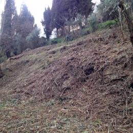 curadelverde.com-cura-del-verde-macerata-treeclimbing-potatura-alberi-alto-fusto-fruttiferi-alberi-da-frutto-olivi-viti-vigna-siepi-giardinaggio-Bonifica 056