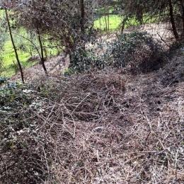 curadelverde.com-cura-del-verde-macerata-treeclimbing-potatura-alberi-alto-fusto-fruttiferi-alberi-da-frutto-olivi-viti-vigna-siepi-giardinaggio-Bonifica 057