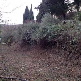 curadelverde.com-cura-del-verde-macerata-treeclimbing-potatura-alberi-alto-fusto-fruttiferi-alberi-da-frutto-olivi-viti-vigna-siepi-giardinaggio-Bonifica 059