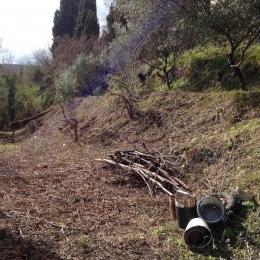 curadelverde.com-cura-del-verde-macerata-treeclimbing-potatura-alberi-alto-fusto-fruttiferi-alberi-da-frutto-olivi-viti-vigna-siepi-giardinaggio-Bonifica 060
