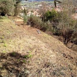 curadelverde.com-cura-del-verde-macerata-treeclimbing-potatura-alberi-alto-fusto-fruttiferi-alberi-da-frutto-olivi-viti-vigna-siepi-giardinaggio-Bonifica 062
