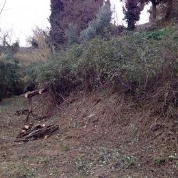 curadelverde.com-cura-del-verde-macerata-treeclimbing-potatura-alberi-alto-fusto-fruttiferi-alberi-da-frutto-olivi-viti-vigna-siepi-giardinaggio-Bonifica 063