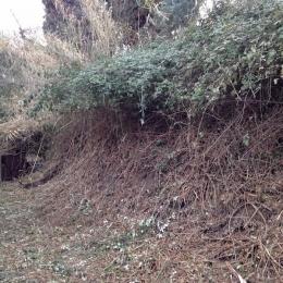 curadelverde.com-cura-del-verde-macerata-treeclimbing-potatura-alberi-alto-fusto-fruttiferi-alberi-da-frutto-olivi-viti-vigna-siepi-giardinaggio-Bonifica 065