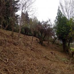 curadelverde.com-cura-del-verde-macerata-treeclimbing-potatura-alberi-alto-fusto-fruttiferi-alberi-da-frutto-olivi-viti-vigna-siepi-giardinaggio-Bonifica 070