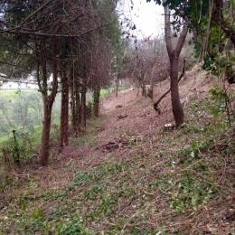 curadelverde.com-cura-del-verde-macerata-treeclimbing-potatura-alberi-alto-fusto-fruttiferi-alberi-da-frutto-olivi-viti-vigna-siepi-giardinaggio-Bonifica 073