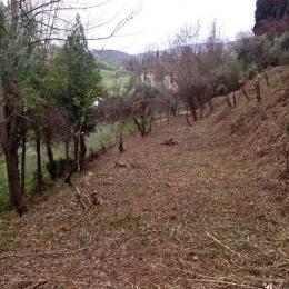 curadelverde.com-cura-del-verde-macerata-treeclimbing-potatura-alberi-alto-fusto-fruttiferi-alberi-da-frutto-olivi-viti-vigna-siepi-giardinaggio-Bonifica 074