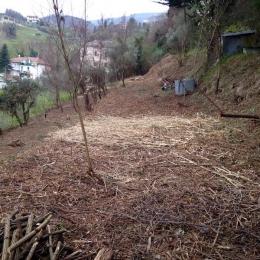 curadelverde.com-cura-del-verde-macerata-treeclimbing-potatura-alberi-alto-fusto-fruttiferi-alberi-da-frutto-olivi-viti-vigna-siepi-giardinaggio-Bonifica 076