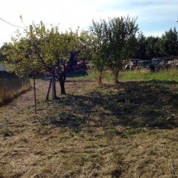 curadelverde.com-cura-del-verde-macerata-treeclimbing-potatura-alberi-alto-fusto-fruttiferi-alberi-da-frutto-olivi-viti-vigna-siepi-giardinaggio-Treeclimbing-BonificaP30