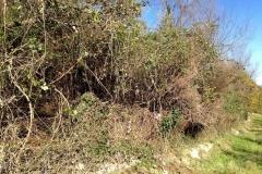 curadelverde.com-cura-del-verde-macerata-treeclimbing-potatura-alberi-alto-fusto-fruttiferi-alberi-da-frutto-olivi-viti-vigna-siepi-giardinaggio-Bonifica 003