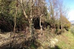 curadelverde.com-cura-del-verde-macerata-treeclimbing-potatura-alberi-alto-fusto-fruttiferi-alberi-da-frutto-olivi-viti-vigna-siepi-giardinaggio-Bonifica 004