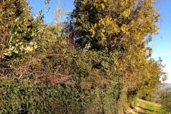 curadelverde.com-cura-del-verde-macerata-treeclimbing-potatura-alberi-alto-fusto-fruttiferi-alberi-da-frutto-olivi-viti-vigna-siepi-giardinaggio-Bonifica 005