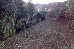curadelverde.com-cura-del-verde-macerata-treeclimbing-potatura-alberi-alto-fusto-fruttiferi-alberi-da-frutto-olivi-viti-vigna-siepi-giardinaggio-Bonifica 021