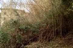 curadelverde.com-cura-del-verde-macerata-treeclimbing-potatura-alberi-alto-fusto-fruttiferi-alberi-da-frutto-olivi-viti-vigna-siepi-giardinaggio-Bonifica 025