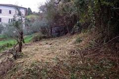 curadelverde.com-cura-del-verde-macerata-treeclimbing-potatura-alberi-alto-fusto-fruttiferi-alberi-da-frutto-olivi-viti-vigna-siepi-giardinaggio-Bonifica 026