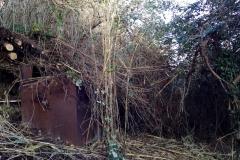 curadelverde.com-cura-del-verde-macerata-treeclimbing-potatura-alberi-alto-fusto-fruttiferi-alberi-da-frutto-olivi-viti-vigna-siepi-giardinaggio-Bonifica 030