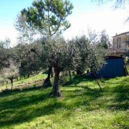 curadelverde.com-cura-del-verde-macerata-treeclimbing-potatura-alberi-alto-fusto-fruttiferi-alberi-da-frutto-olivi-viti-vigna-siepi-giardinaggio-Treeclimbing-Olivi.G16.020